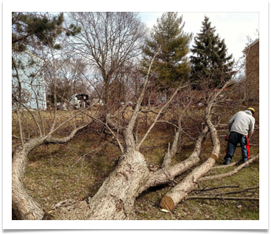 Image of Tree Damage from Storm